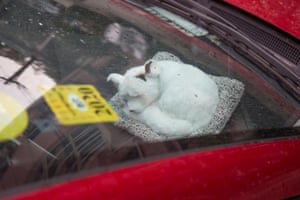 A curled up creature on the dashboard of a car