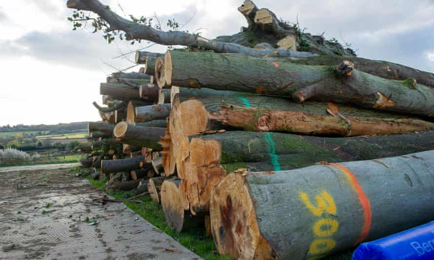 Mature trees felled in the Chilterns AONB for the High Speed Rail 2 rail project
