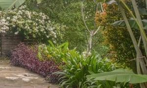 A rainforest garden in Janda Baik.