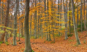 Autumn colours in the woods at Plas Power