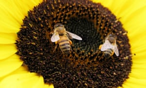 Declines in bees have many possible causes including habitat loss, pesticides, pollution, invasive species, pathogens and climate change.