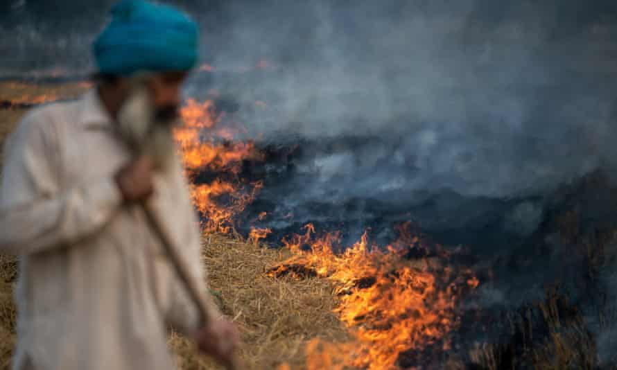 A farmer feeds a controlled fire of spent rice stalks as he prepares a field for a new crop in the Indian state of Punjab