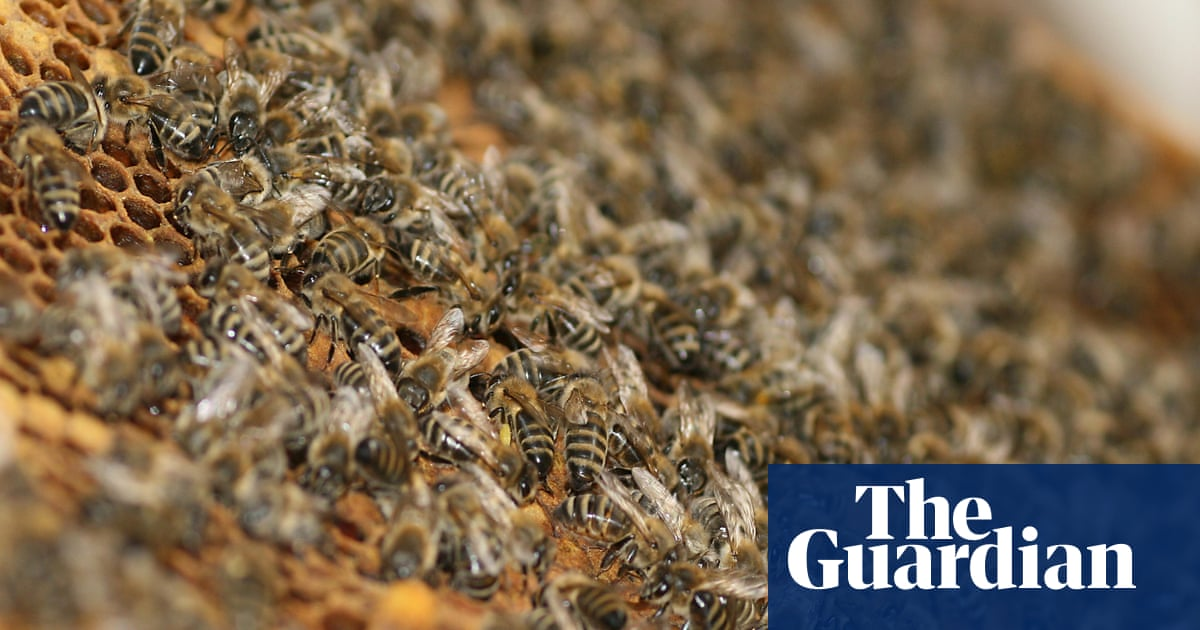 One man dead after hundreds of stings from Arizona bee swarm
