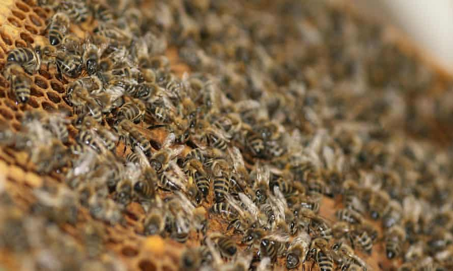 Bee swarms are a relatively common and sometimes dangerous occurrence in Arizona.