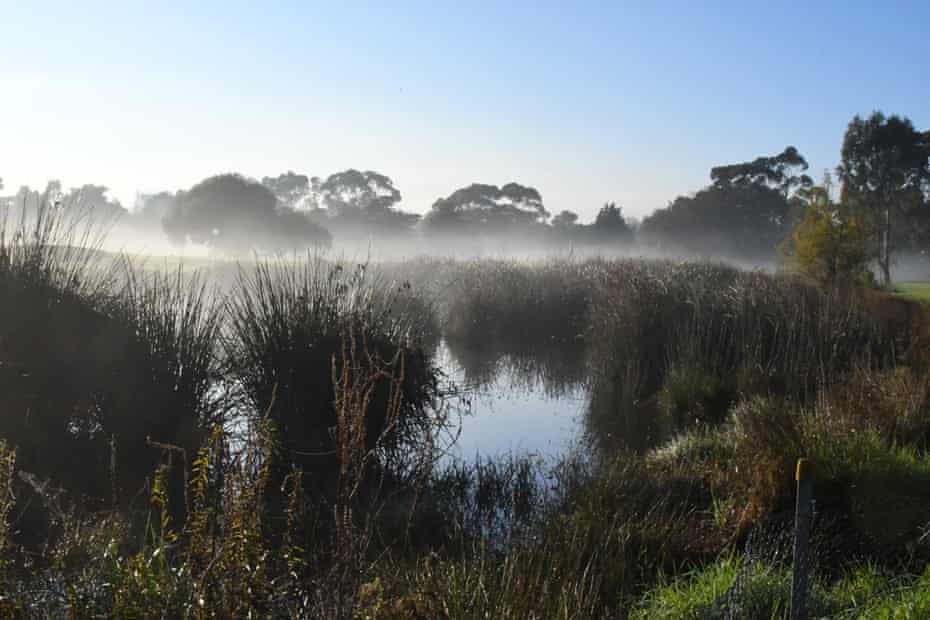 Mist rises from the landscape at Elwood in Melbourne