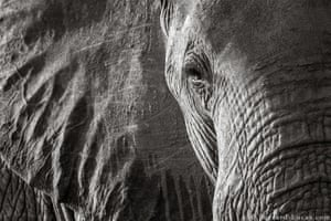 A close-up of an elephant