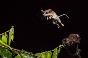 Tropical acrobatics by Adrià López Baucells in Manaus, Brazil