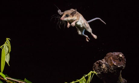 Royal Society of Biology photographer of the year: the shortlist