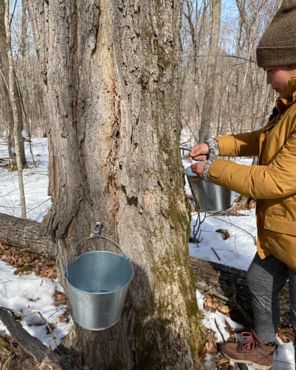 Tara Houska's group Giniw Collective has led several direct actions against the Line 3 pipeline. Here, she demonstrates how to tap a tree for syrup. She stresses that young people need to stay connected to the land.