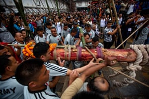 A pine pole is erected by Indra Jatra festivalgoers