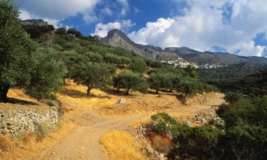Hills and olive groves in south-west Crete.
