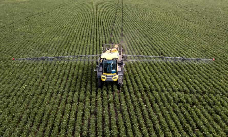 A soya bean field in Argentina
