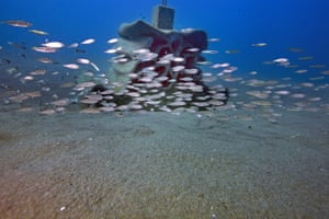 Young fish swim around a 3D printed reef off Le Cap d'Agde, southern France