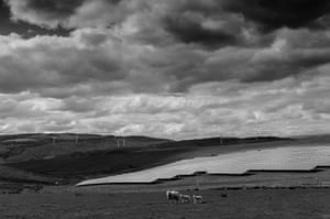 Sheep pass a solar and windfarm in Rhigos, Neath Valley, South Wales