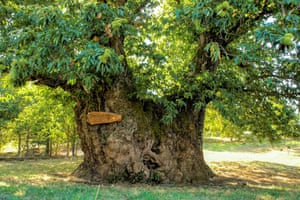 Portugal: the Chestnut Tree from ValesAge: 1,000-year-old.Species: chestnut tree (Castanea sativa).Location: Tresminas, Vila Pouca de Aguiar, Vila Real. With a 4.5-metre wide trunk this tree is one of the largest trees in Portugal.
