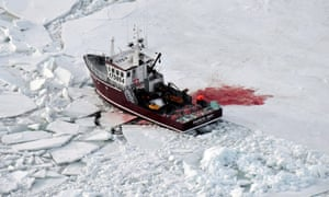 A vessel loaded with seal pelts during the 2009 commercial seal hunt in the Gulf of St Lawrence, Canada.