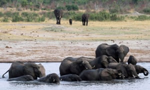 Elephants in Zimbabwe's Hwange National Park.