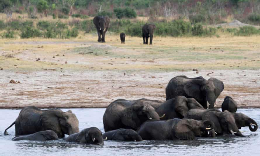 Elephants in Zimbabwe's Hwange National Park.
