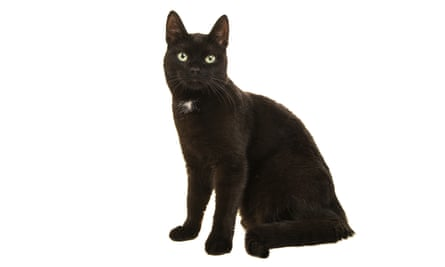 Black cats are seen, rightly or wrongly, as less playful.