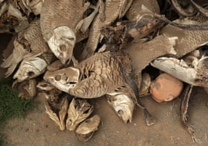 A doll's head lies among a pile of dead fish collected from the dried municipal dam in drought-stricken Graaff-Reinet, South Africa.