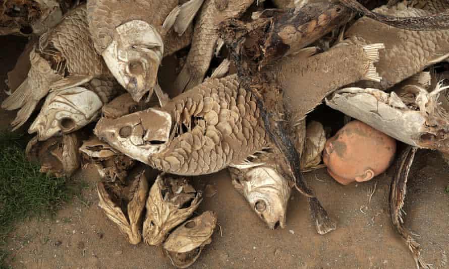 A doll's head lies among dead fish