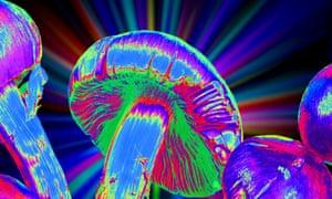 Magic mushrooms
