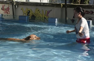 A dog swims back to its owner