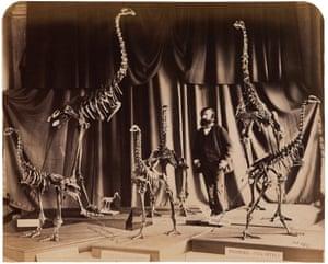 Daniel Louis Mundy, The Extinct Dinornis, or Moa Bird, 1867