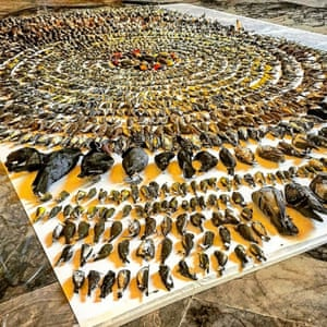 A display of more than 2,100 birds that died flying into buildings in Toronto in 2015