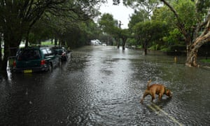 A dog in a flooded street