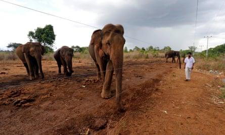 An electric fence separates elephants and humans at the Udawalawe wildlife sanctuary, Sri Lanka.