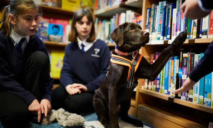 Rolo the learning support school dog at Huntington school, York.