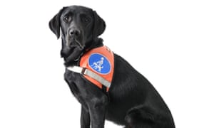 Good dog: a real service dog at your service.