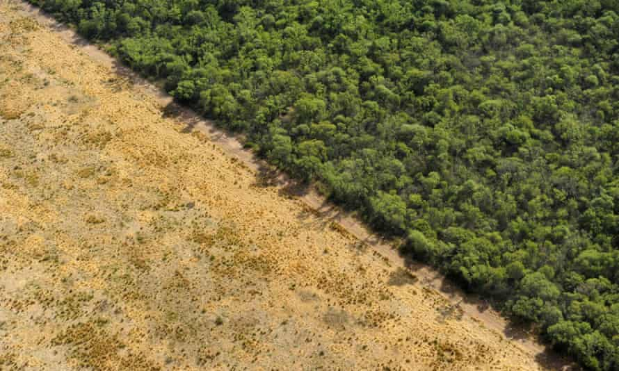 The border between native forest and land that has been cleared for agriculture in Salta, Argentina. Which does more damage - eating wild meat, or eating factory farmed meat?