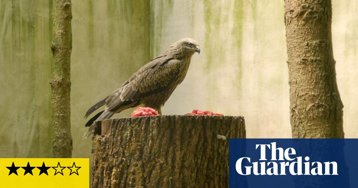Bird Island review – strange goings-on at a Swiss avian sanctuary