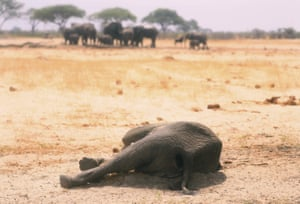 In this photo taken on 10 November 2019 a dead elephant lies in the Hwange National Park, Zimbabwe. More than 200 elephants died amid a severe drought.