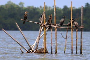 Young Photographer of the Year winner: Waiting, by Ashwin Geerthan in Hikkaduwa, Sri Lanka These Indian cormorants are patiently waiting on a structure made of sticks that was setup by humans for fishing. The birds have used the structure to their own advantage, which shows how they have changed to live alongside humans