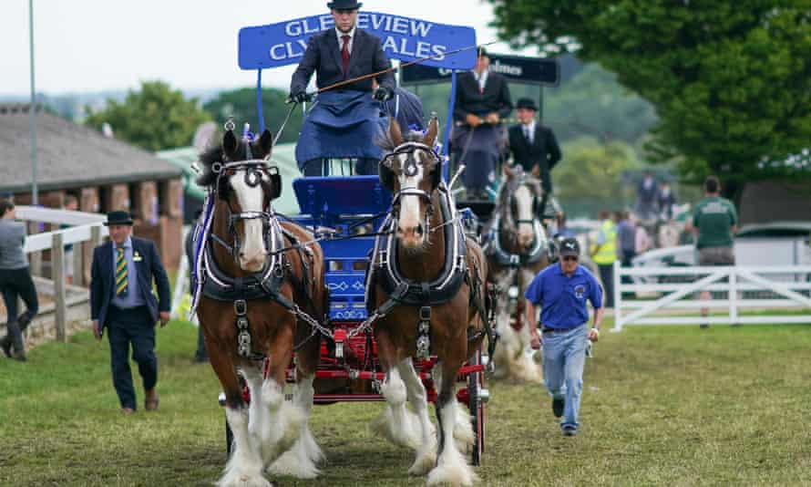 Heavy horse Pairs entertain the crowds at the 162nd Great Yorkshire Show, July 2021.