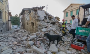 A dog searches through the rubble in Amatrice.
