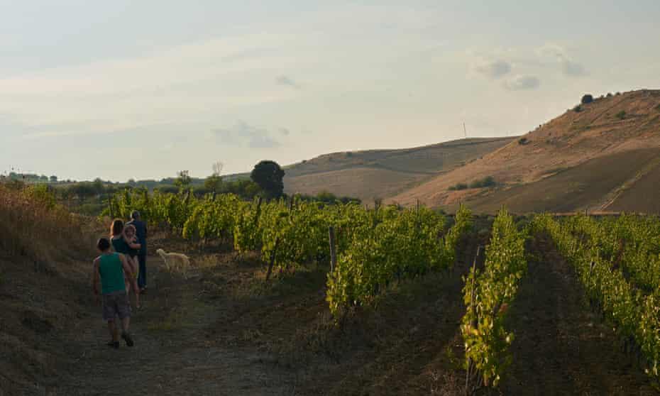 Rachel and her family walk beside rows of grape vines near Gela, Sicily