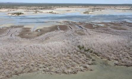 Mangrove die-off in Gulf of Carpentaria
