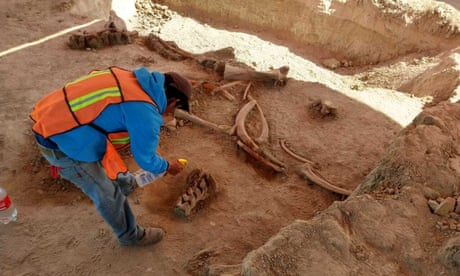 'There are too many': bones of 60 mammoths found in Mexico