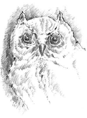 Illustration by Günter Grass.