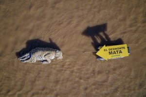 A handout photo from Greenpeace showing a figure representing a dead jaguar over the waters of Puerto Madero, in Buenos Aires, Argentina. Greenpeace is warning of the risk of extinction of the species in Argentina due to the destruction of forests, its natural habitat