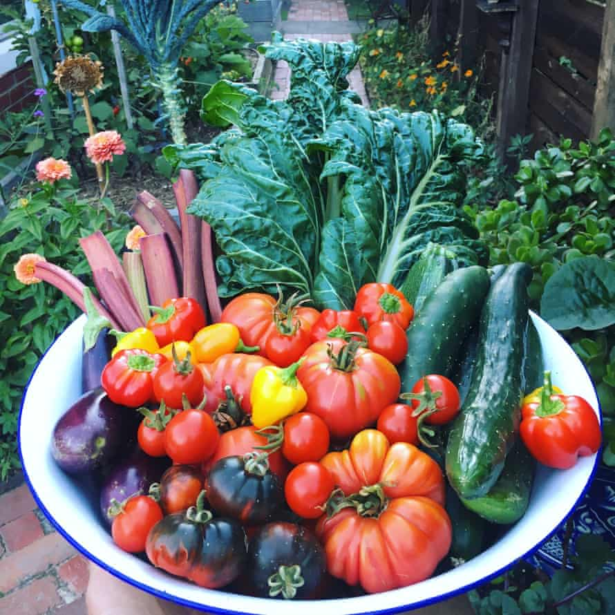photo of lots of vegetables