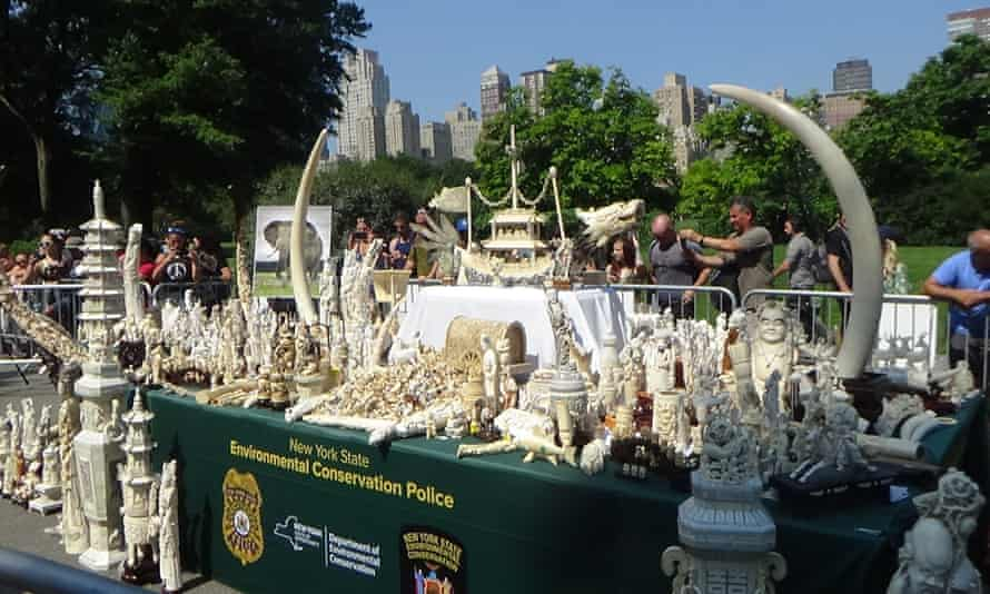 Last month two tonnes of ivory were crushed in Central Park in New York, in a display jointly organised by the Wildlife Conservation Society (WCS) and the New York State Department of Environmental Conservation.