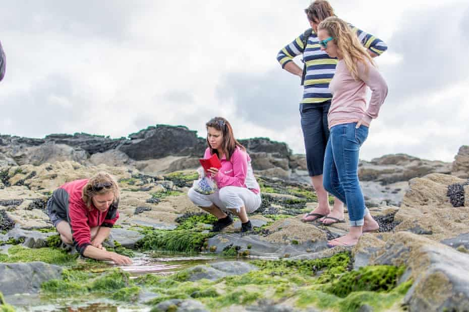 Rachel Lambert seaweed foraging.