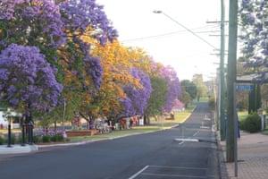 Jacaranda trees on the main street of Goombungee, Queensland, in the lead-up Jacaranda Day