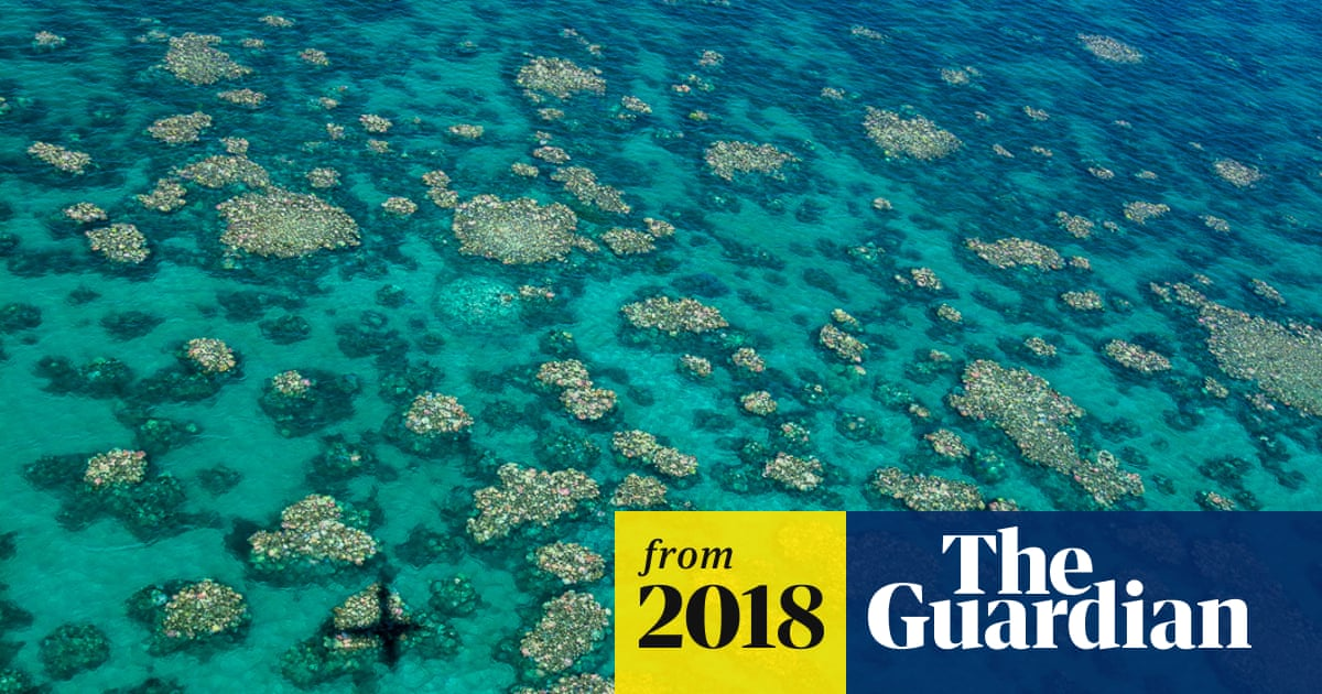 Great Barrier Reef: record heatwave may cause another coral bleaching event