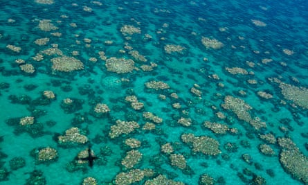 A record-breaking heatwave means the Great Barrier Reef is again under threat of coral bleaching.